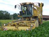 stroj za spravilo pese ROPA Eurotiger